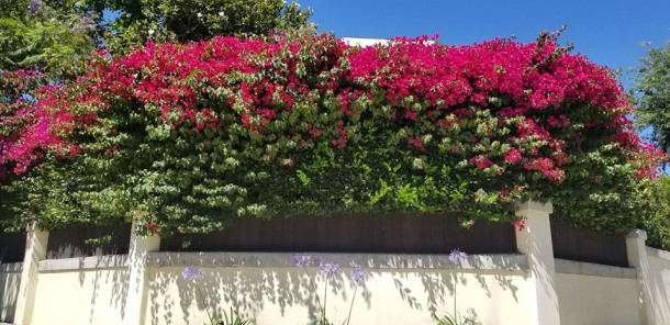 studio city flowers