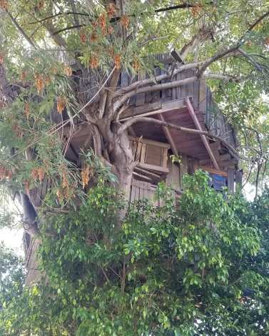 studio city tree house 1