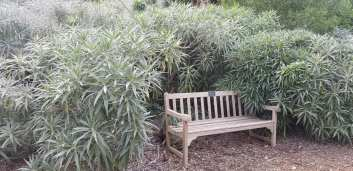 Botanical sage