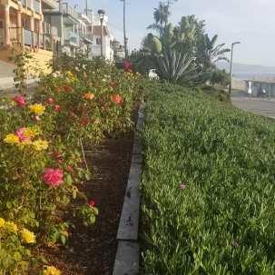 MH flower garden